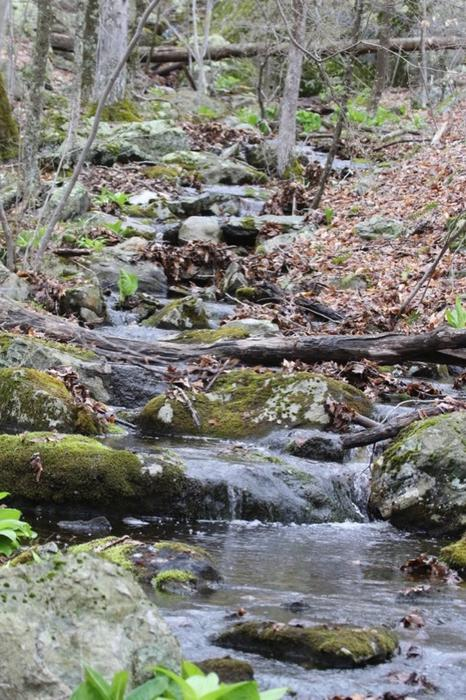 A little stream that changes form depending on the time of year. (Credit: Avalonia Land Conservancy)