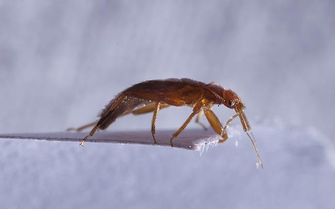 bed bug crawling on a piece of paper