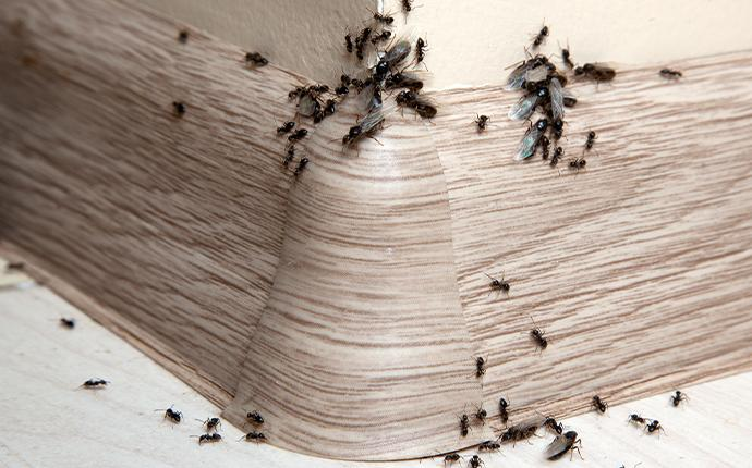 ants crawling on the floor in a house