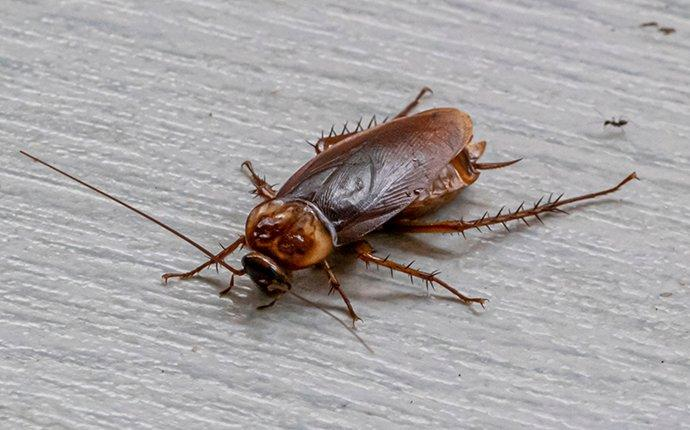 cockroach crawling on living room floor