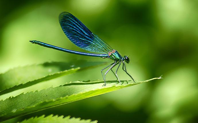 a dragonfly on a green leaf