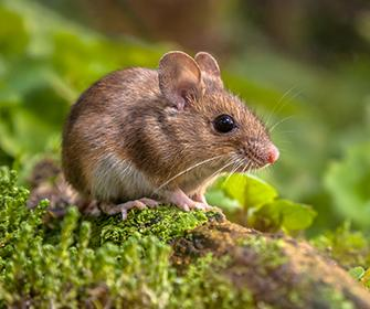 a mouse on the forest floor