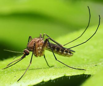 a mosquito on a leaf