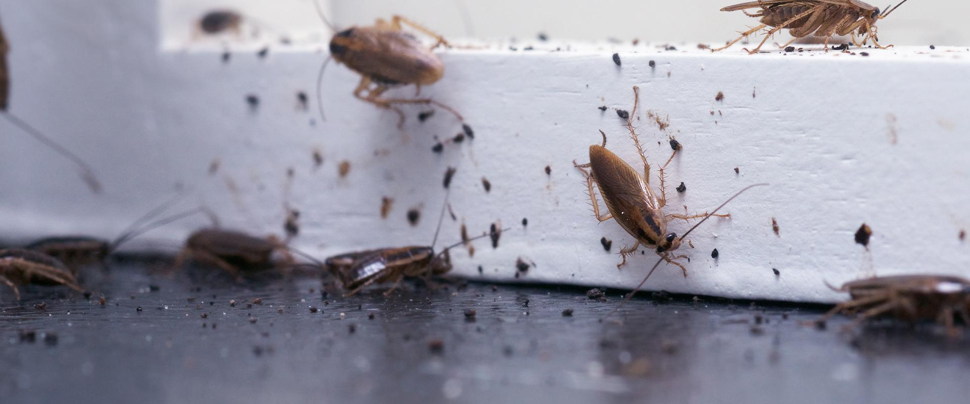 cockroaches crawling around windowsill