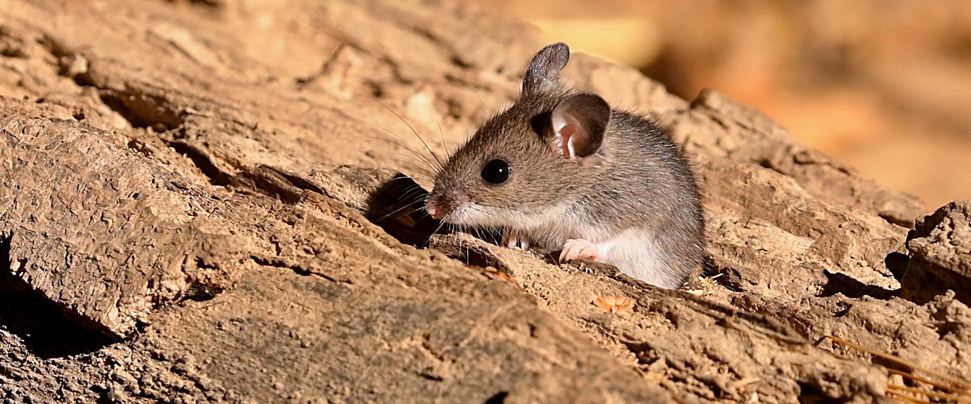 a mouse on wood