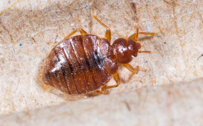 a bed bug crawling on a box spring