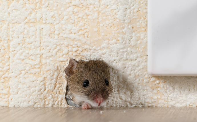 a mouse in a hole in the wall