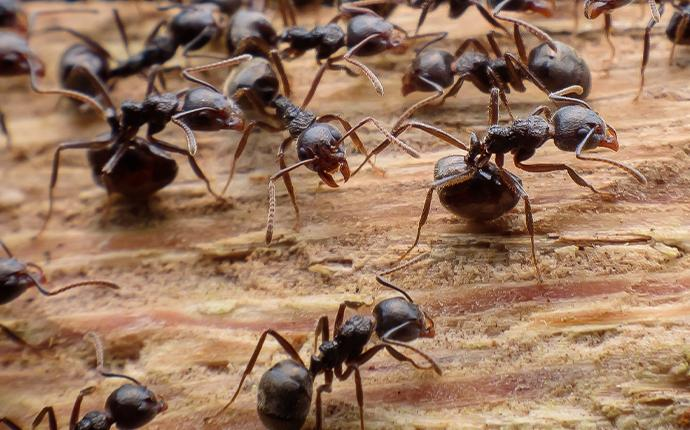 a close up of ants on wood