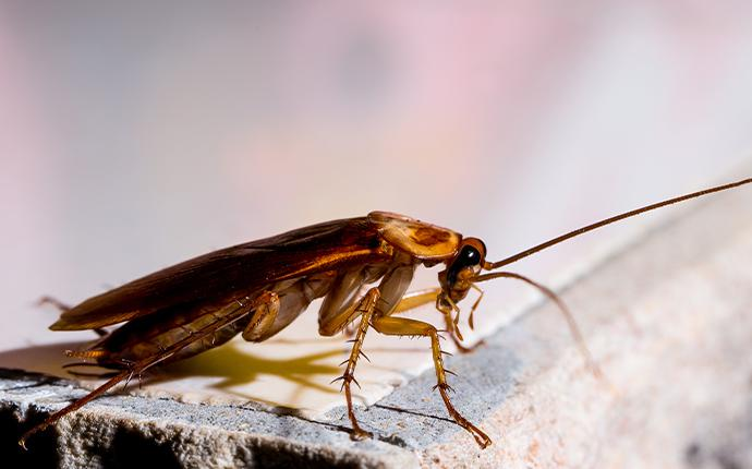 a close up of a cockroach