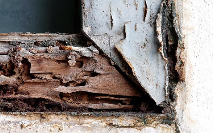 a close up of damaged wood