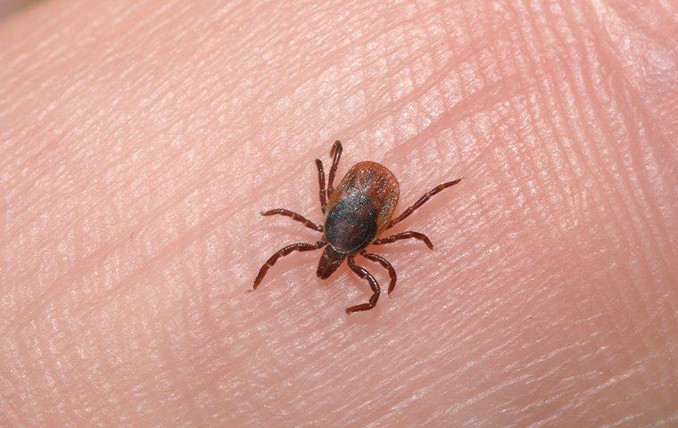a tick on a finger