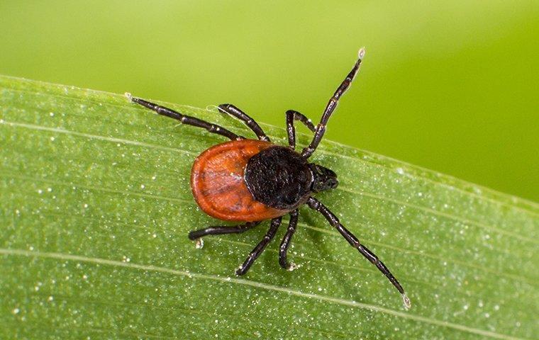 a tick on grass