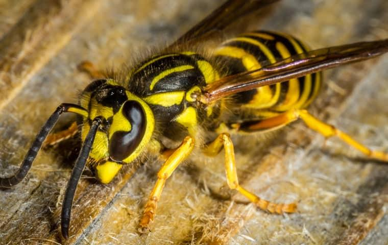 a yellow jacket on wooden surface