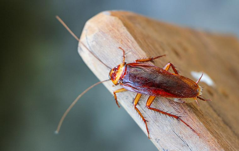 a cockroach on a wooden plank