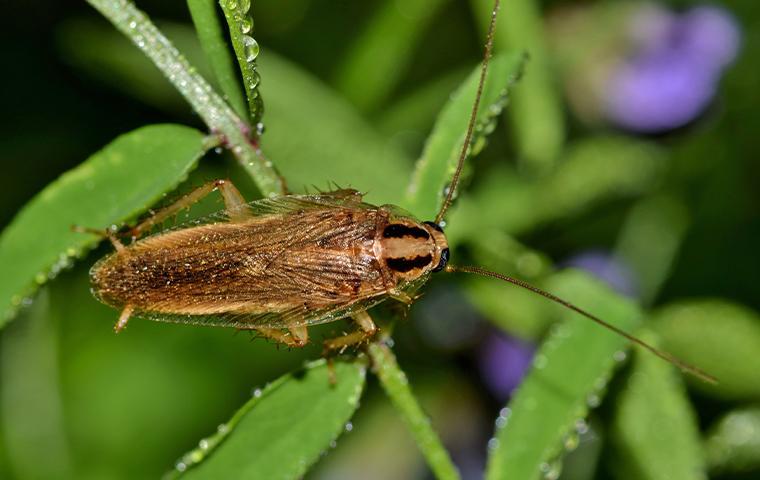 a cockroach on a plant