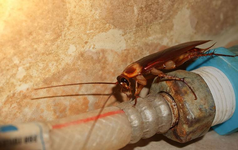 cockroach on water line