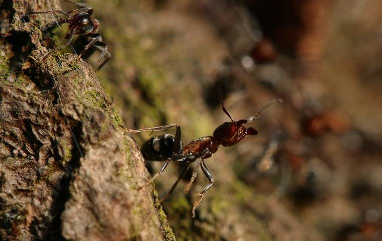 ant on bark of a tree