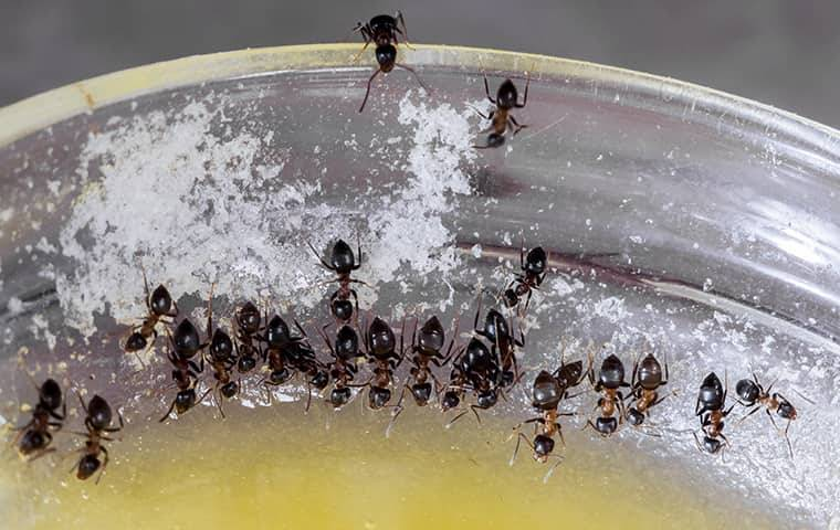 close up of ants crawling in a bowl
