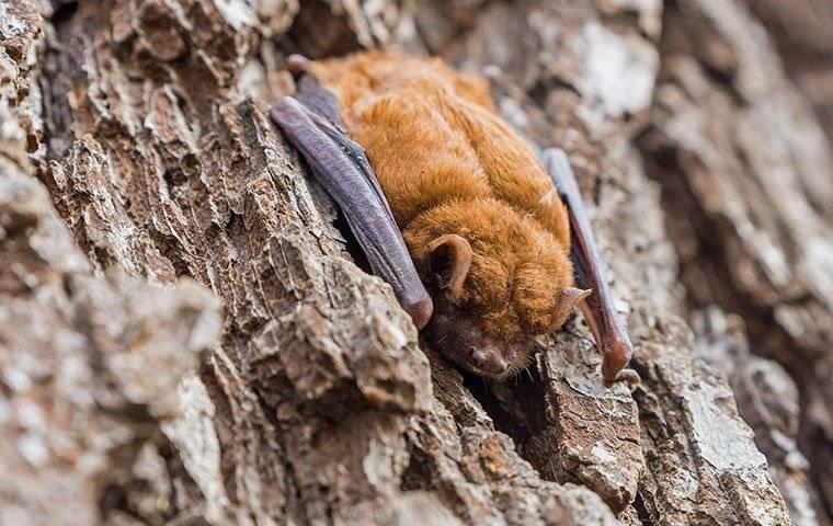 brown bat on a tree