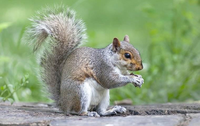 a squirrel on a stump