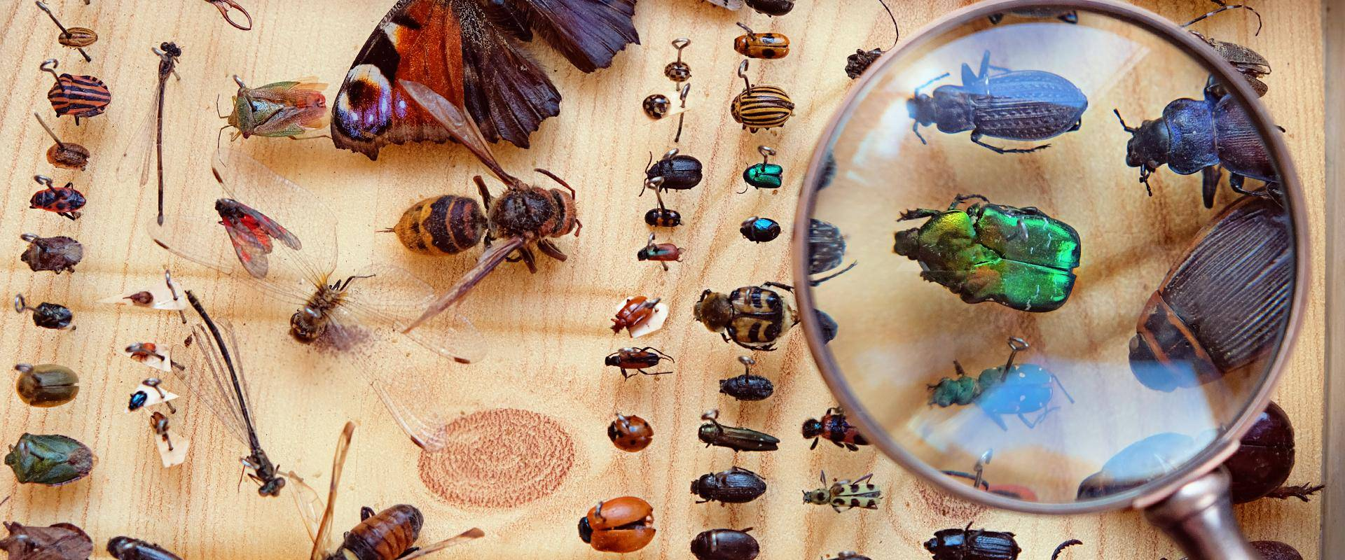 bugs on a table