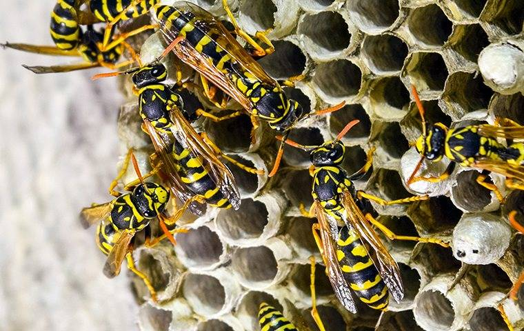a swarm of stinging insects on a nest outside of a rowley home