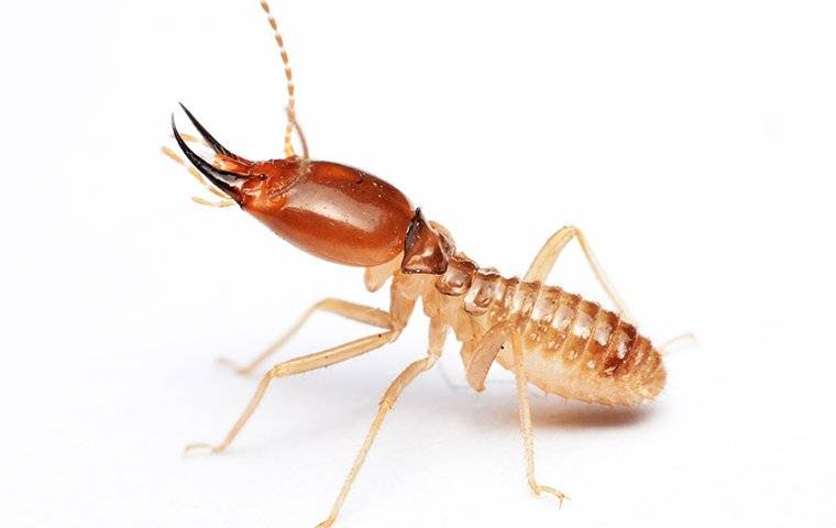 termite on white surface