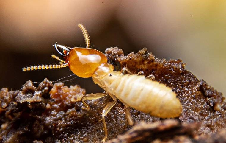 a termite crawling on rotten wood