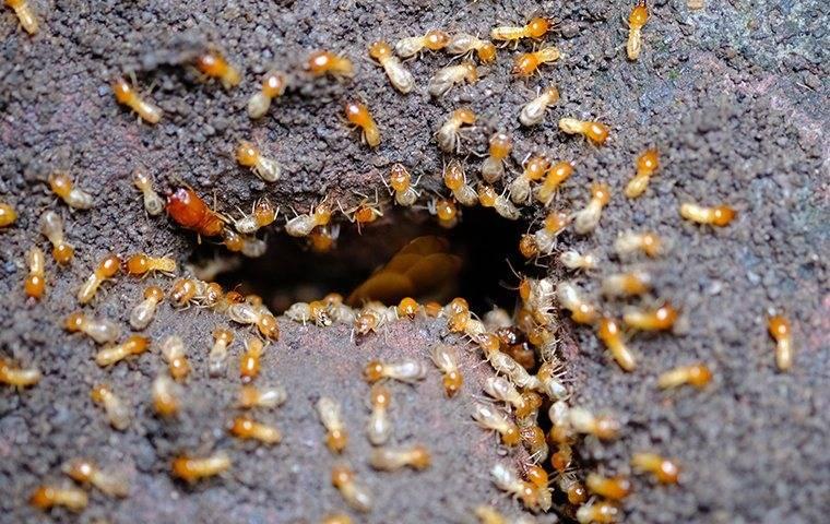 termite damamge in a woburn home