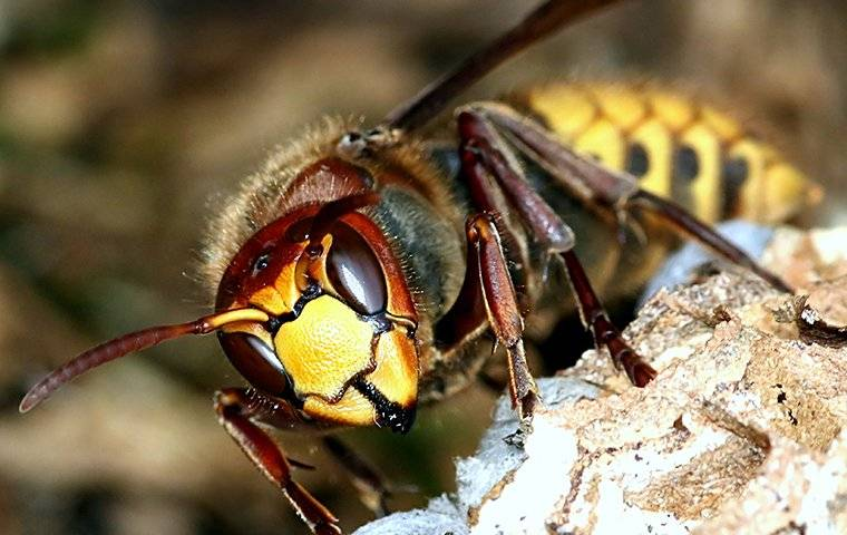 an up close image of a wasp crawling on its nest