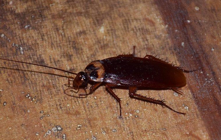 cockroach in a basement