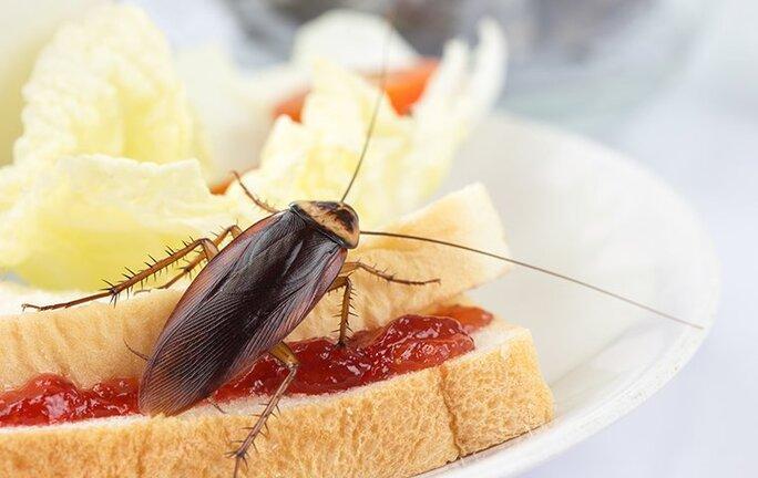 cockroach crawling on a sandwich
