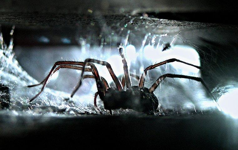 spider crawling in web inside home