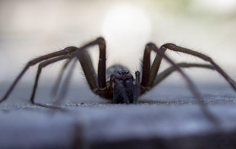 an up close image of a wolf spider crawling on pavement