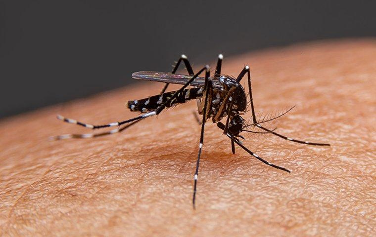 mosquito biting a man
