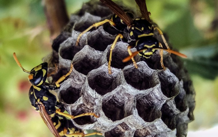 two wasps on a wasp nest