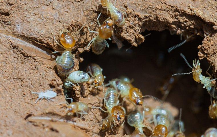termites near a hole