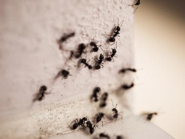 ants on outside wall in streator