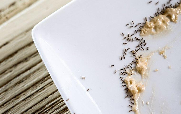 ants eating pasta on a plate