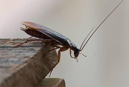 cockroach in illinois kitchen
