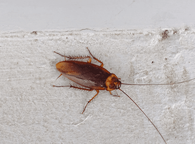 cockroach climbing on wall