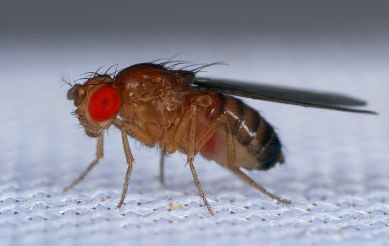 a fruit fly on a kitchen towel