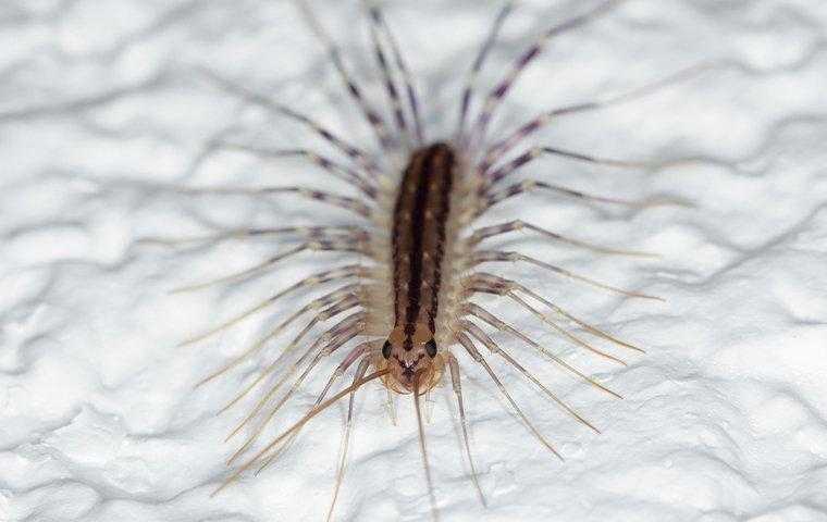 a house centipede crawling on a shower stall