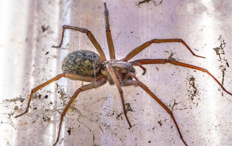 a house spider in a web
