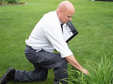 a certified pest control technitions kneeling down as he inspects a rock island lawn before treating for fleas
