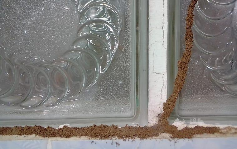 a long line of muddy tubing along the basement window in a davanport home
