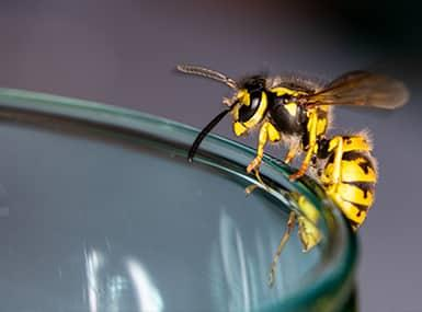a hornet perched on the rim of a drinking glass