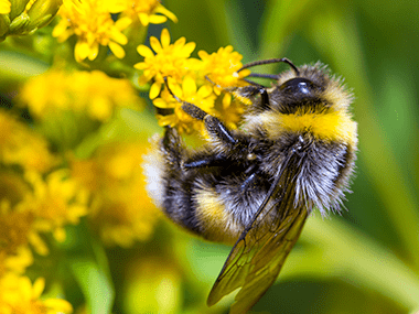 a bumble bee on a flower outside of a home in peru illinois