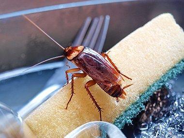cockroach on sponge