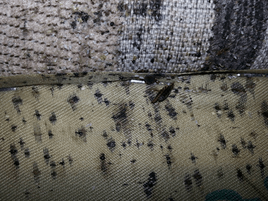 a chair covered with bed bug feces in a home in plano illinois